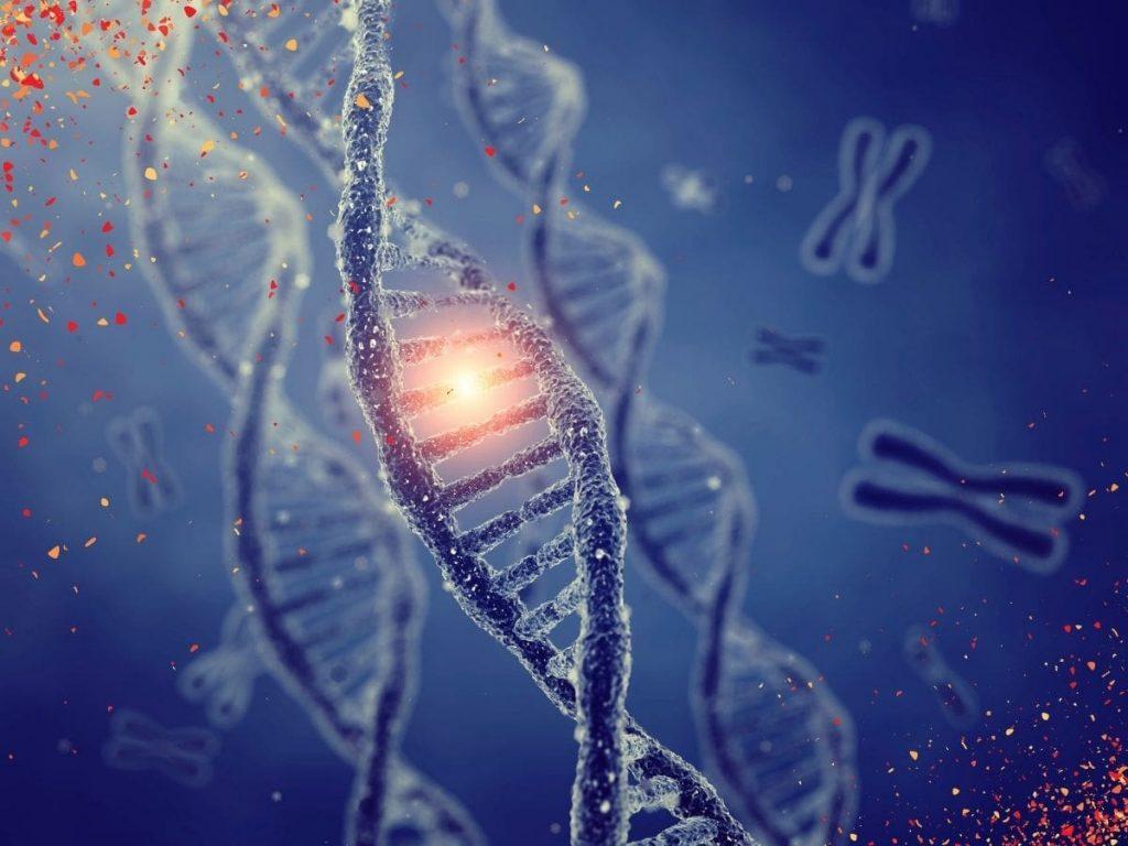 Human Design Genetic - Stefanie Trübcher